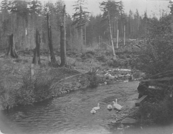 Gates Ranch Curley Creek 1