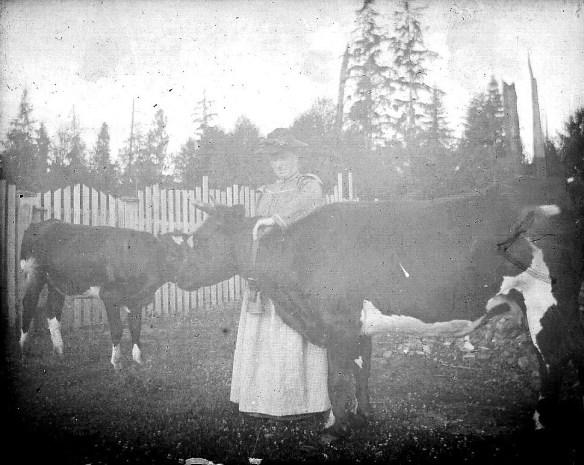 Cattle were grown primarily for milk, but occasionally when one no longer produced milk it was slaughtered and shared. In the age before electricity and refrigeration, everyone in town was invited to partake. From the Jay Blackburn Collection.